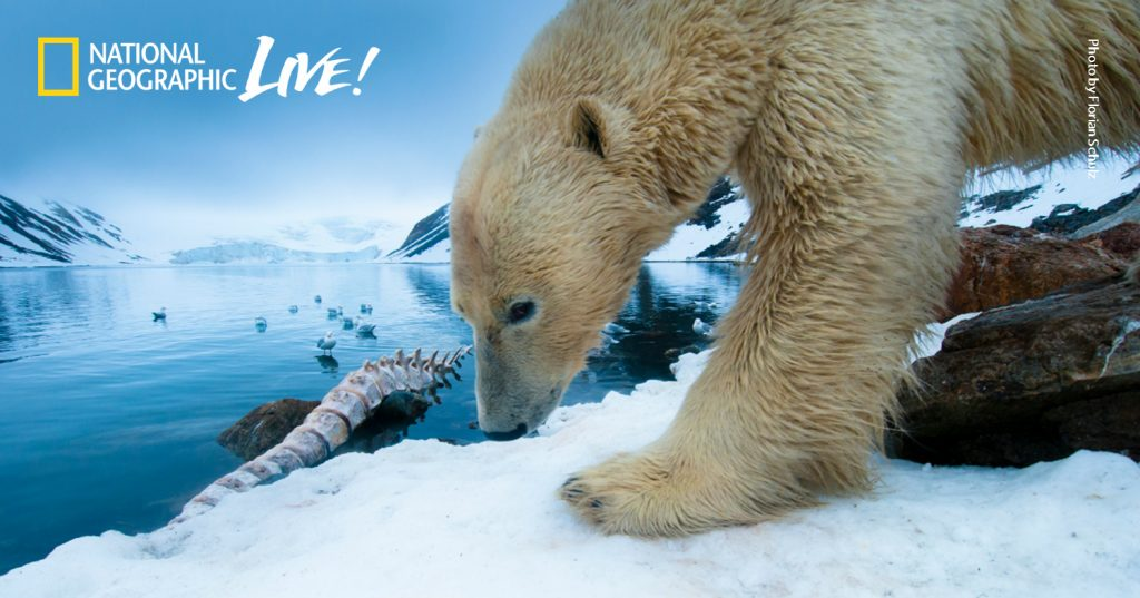 Polar Bear photo by National Geographic Live speaker Florian Schulz